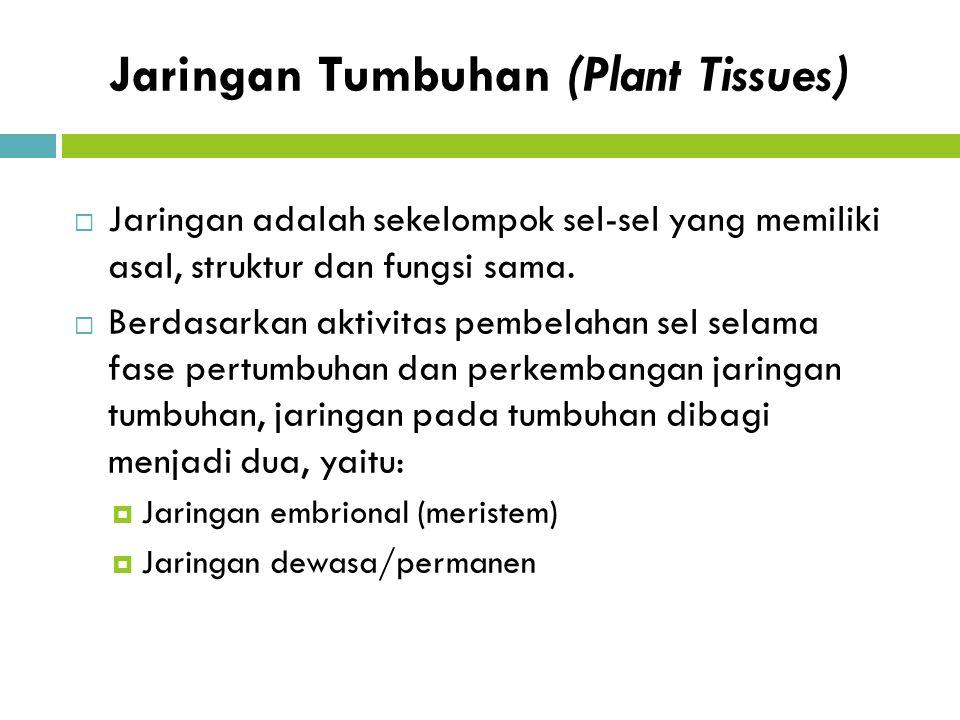 Jaringan Tumbuhan (Plant Tissues)  Jaringan adalah sekelompok sel-sel yang memiliki asal, struktur dan fungsi sama.  Berdasarkan aktivitas pembelaha