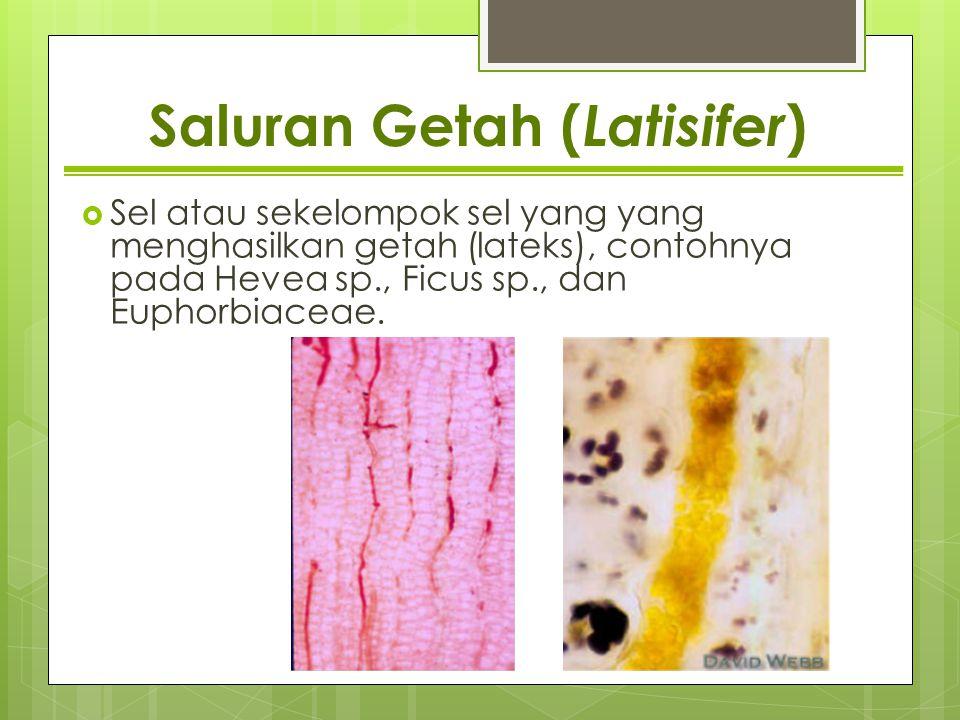 Saluran Getah ( Latisifer )  Sel atau sekelompok sel yang yang menghasilkan getah (lateks), contohnya pada Hevea sp., Ficus sp., dan Euphorbiaceae.