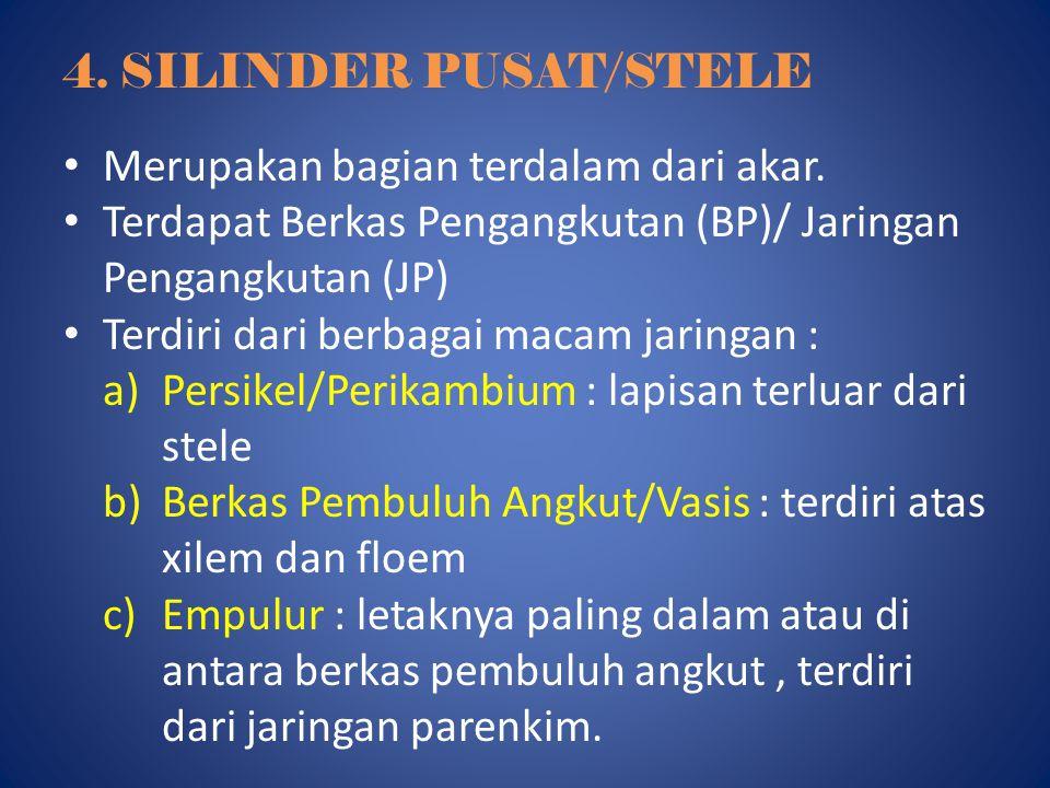 4. SILINDER PUSAT/STELE Merupakan bagian terdalam dari akar. Terdapat Berkas Pengangkutan (BP)/ Jaringan Pengangkutan (JP) Terdiri dari berbagai macam