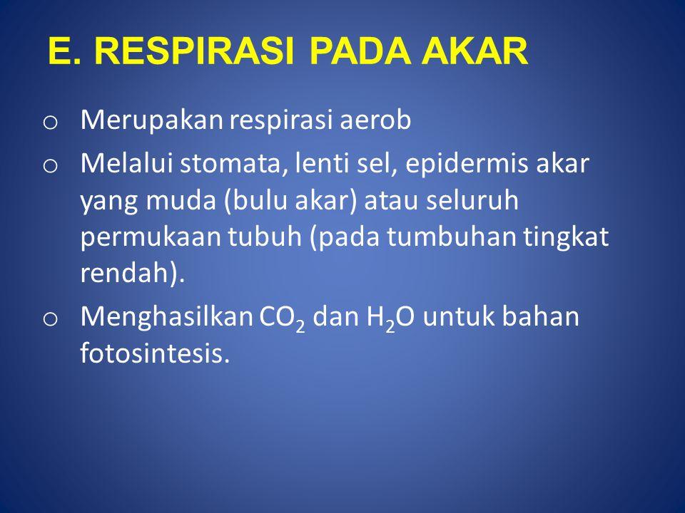E. RESPIRASI PADA AKAR o Merupakan respirasi aerob o Melalui stomata, lenti sel, epidermis akar yang muda (bulu akar) atau seluruh permukaan tubuh (pa