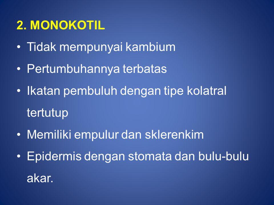 2. MONOKOTIL Tidak mempunyai kambium Pertumbuhannya terbatas Ikatan pembuluh dengan tipe kolatral tertutup Memiliki empulur dan sklerenkim Epidermis d