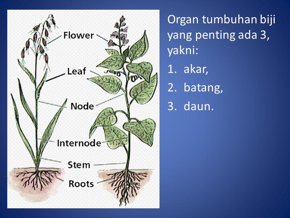Organ tumbuhan biji yang penting ada 3, yakni: 1.akar, 2.batang, 3.daun.