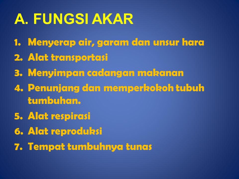 A. FUNGSI AKAR 1.Menyerap air, garam dan unsur hara 2.Alat transportasi 3.Menyimpan cadangan makanan 4.Penunjang dan memperkokoh tubuh tumbuhan. 5.Ala