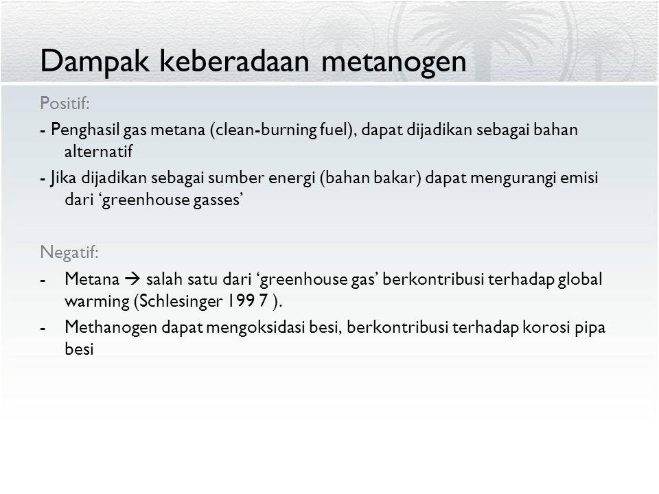 Dampak keberadaan metanogen Positif: - Penghasil gas metana (clean-burning fuel), dapat dijadikan sebagai bahan alternatif - Jika dijadikan sebagai su