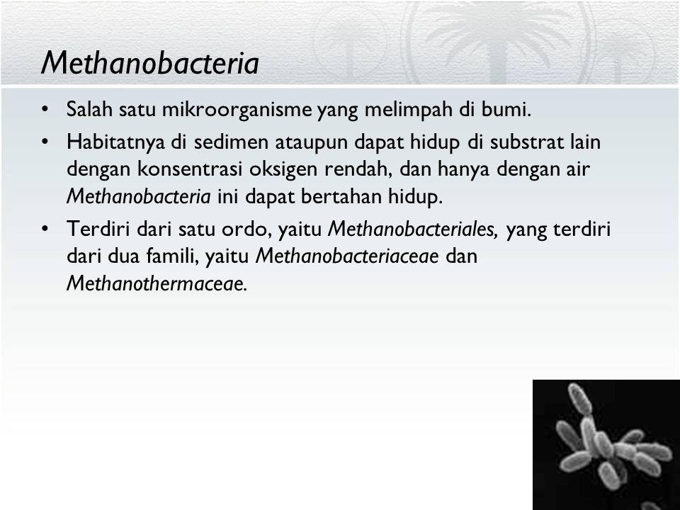 Methanobacteria Salah satu mikroorganisme yang melimpah di bumi. Habitatnya di sedimen ataupun dapat hidup di substrat lain dengan konsentrasi oksigen