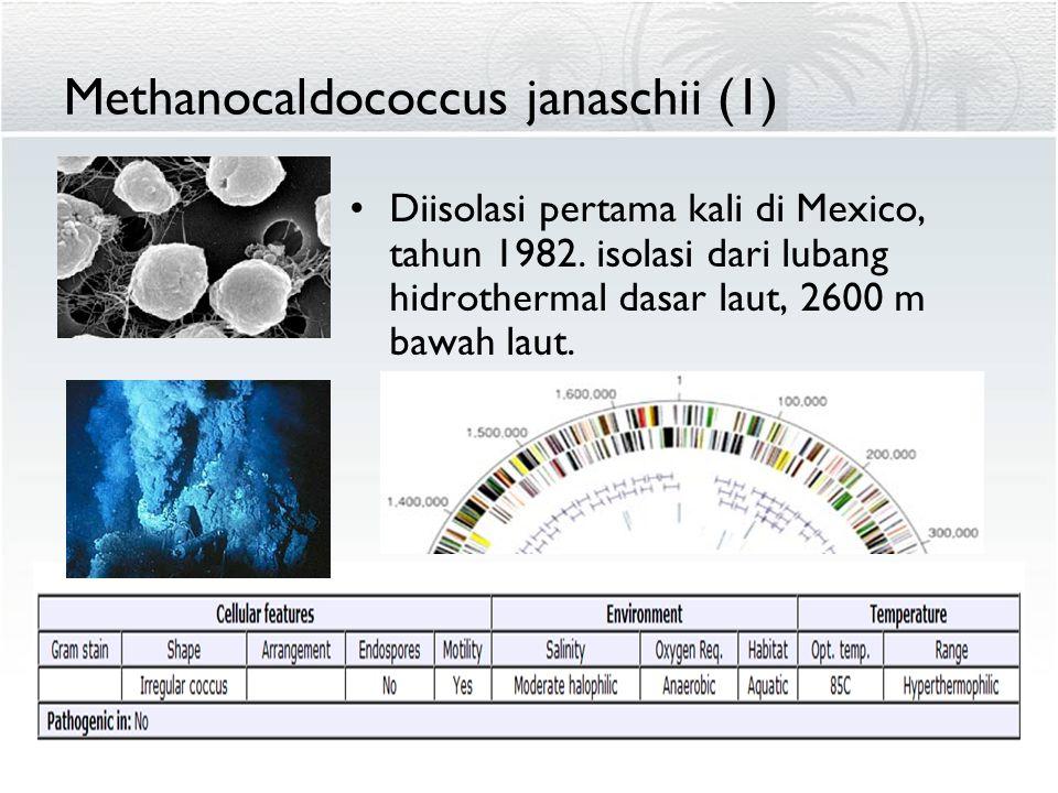 Methanocaldococcus janaschii (1) Diisolasi pertama kali di Mexico, tahun 1982. isolasi dari lubang hidrothermal dasar laut, 2600 m bawah laut.