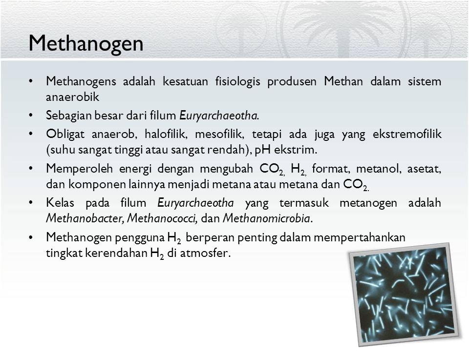 Methanogen Methanogens adalah kesatuan fisiologis produsen Methan dalam sistem anaerobik Sebagian besar dari filum Euryarchaeotha. Obligat anaerob, ha
