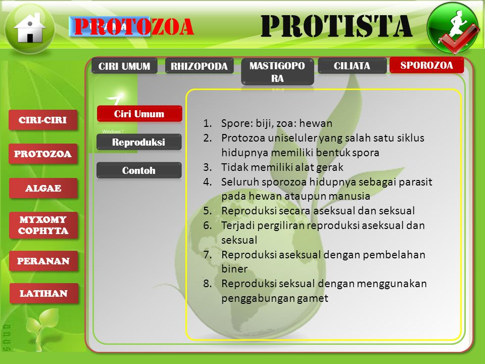 UTAMA PROTISTA CIRI-CIRI PROTOZOA ALGAE MYXOMY COPHYTA MYXOMY COPHYTA PERANAN LATIHAN 1.Spore: biji, zoa: hewan 2.Protozoa uniseluler yang salah satu