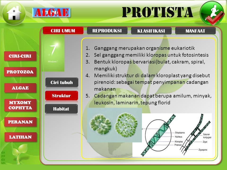 UTAMA PROTISTA CIRI-CIRI PROTOZOA ALGAE MYXOMY COPHYTA MYXOMY COPHYTA PERANAN LATIHAN 1.Ganggang merupakan organisme eukariotik 2.Sel ganggang memilik