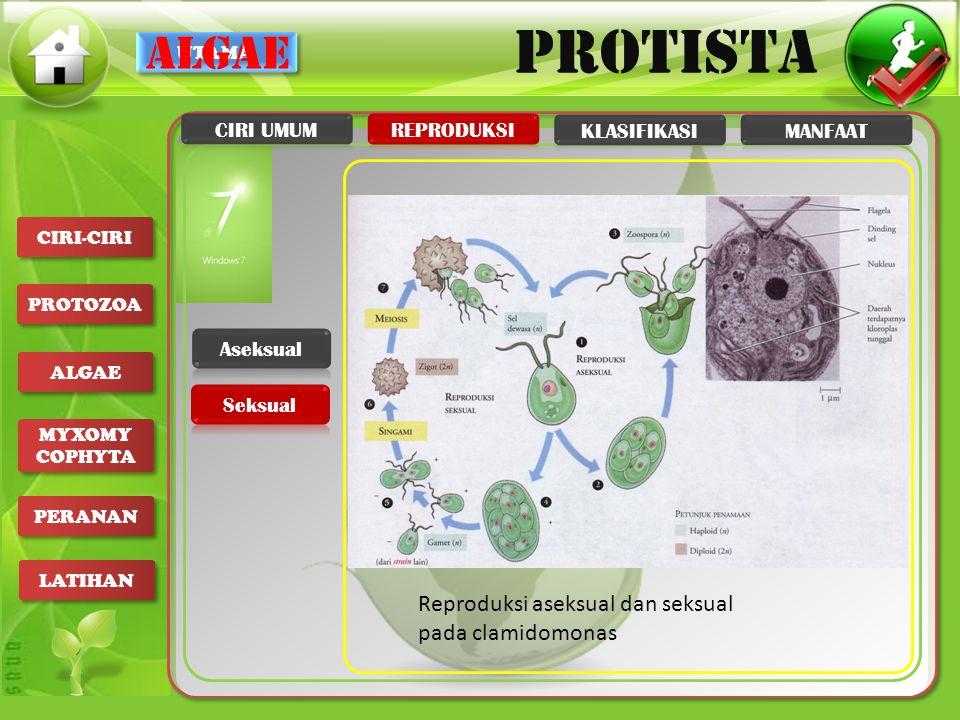 UTAMA PROTISTA CIRI-CIRI PROTOZOA ALGAE MYXOMY COPHYTA MYXOMY COPHYTA PERANAN LATIHAN algae Reproduksi aseksual dan seksual pada clamidomonas