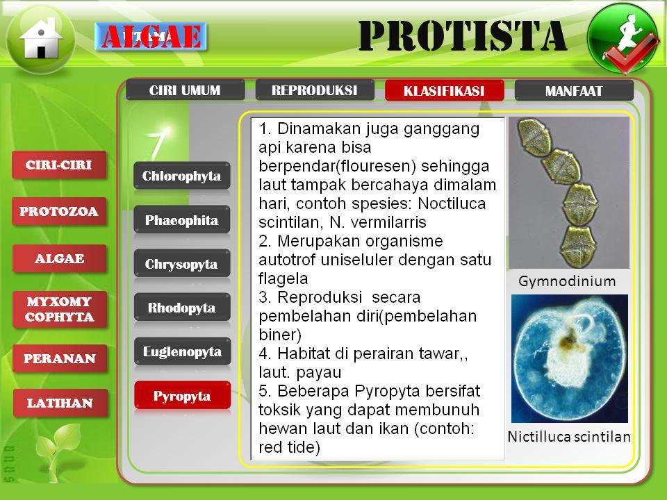 UTAMA PROTISTA CIRI-CIRI PROTOZOA ALGAE MYXOMY COPHYTA MYXOMY COPHYTA PERANAN LATIHAN algae Gymnodinium Nictilluca scintilan