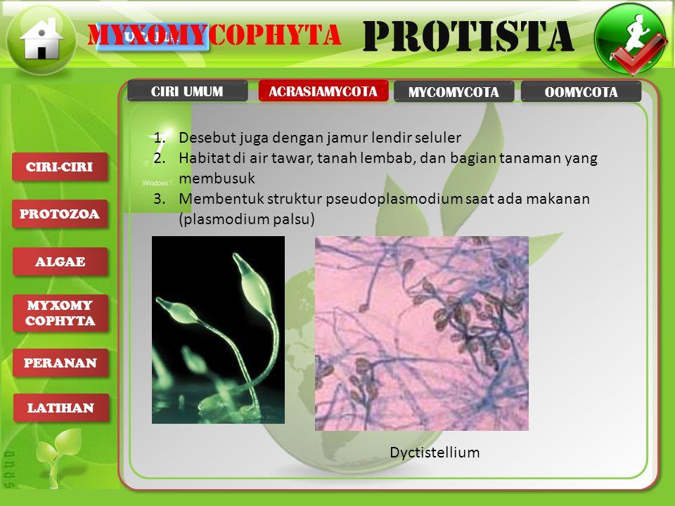 UTAMA PROTISTA CIRI-CIRI PROTOZOA ALGAE MYXOMY COPHYTA MYXOMY COPHYTA PERANAN LATIHAN 1.Desebut juga dengan jamur lendir seluler 2.Habitat di air tawa
