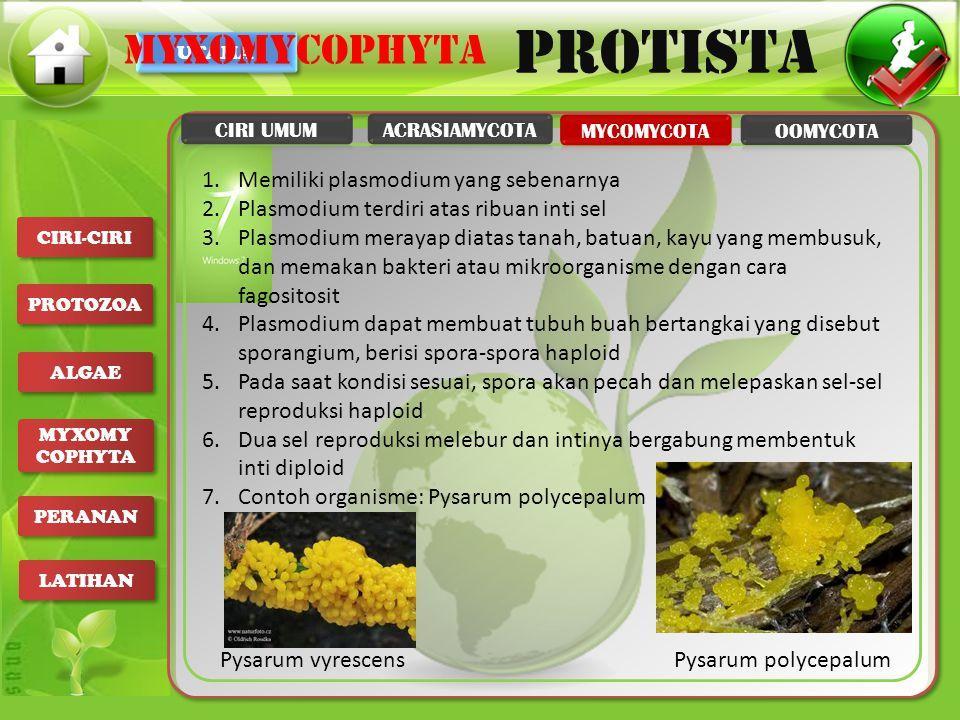 UTAMA PROTISTA CIRI-CIRI PROTOZOA ALGAE MYXOMY COPHYTA MYXOMY COPHYTA PERANAN LATIHAN 1.Memiliki plasmodium yang sebenarnya 2.Plasmodium terdiri atas