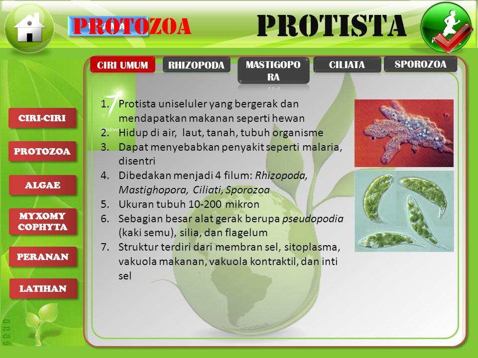 UTAMA PROTISTA CIRI-CIRI PROTOZOA ALGAE MYXOMY COPHYTA MYXOMY COPHYTA PERANAN LATIHAN 1.Euglena viridis: indikator polusi air/ sungai 2.Radiolaria dna Foraminifera: indikator adanya minyak bumi 3.Entamoeba coli: membusukkan makanan pada usus besar 4.Saprolegnia: penguarai dalam ekosistem air tawar 5.Ganggang coklat: untuk campuran pembuatan salep, es krim, tablet PERANAN