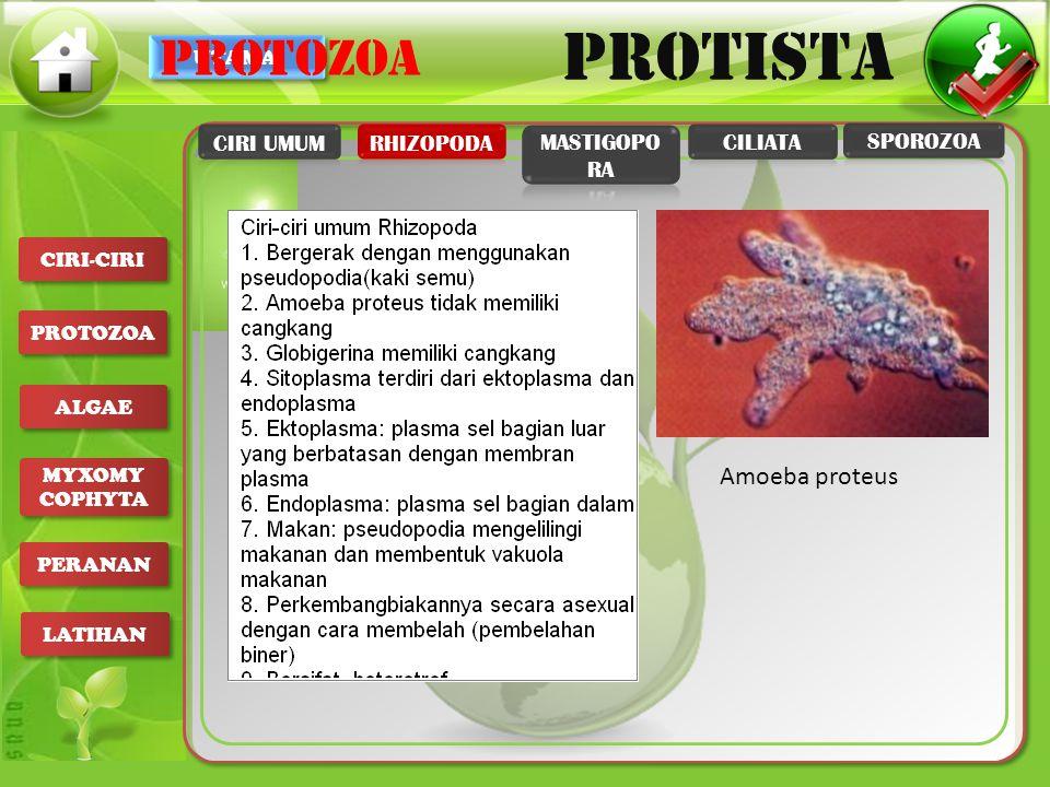 UTAMA PROTISTA CIRI-CIRI PROTOZOA ALGAE MYXOMY COPHYTA MYXOMY COPHYTA PERANAN LATIHAN 1.Mempunyai flagella (bulu cambuk) 2.Hidup sebagai parasit 3.Hidup bebas di habitat air laut dan air tawar 4.Permukaan tubuhnya dilapisi oleh kutikula 5.Beberapa hidupnya bersimbiosis PROTOZOA