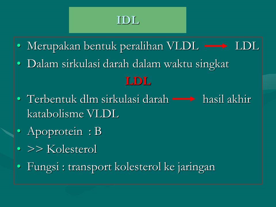 IDL Merupakan bentuk peralihan VLDL LDLMerupakan bentuk peralihan VLDL LDL Dalam sirkulasi darah dalam waktu singkatDalam sirkulasi darah dalam waktu