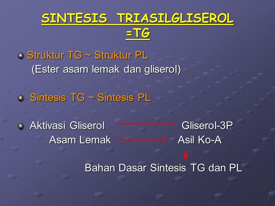 SINTESIS TRIASILGLISEROL =TG Struktur TG ~ Struktur PL (Ester asam lemak dan gliserol) (Ester asam lemak dan gliserol) Sintesis TG ~ Sintesis PL Sinte