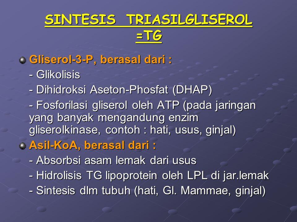 SINTESIS TRIASILGLISEROL =TG Gliserol-3-P, berasal dari : - Glikolisis - Dihidroksi Aseton-Phosfat (DHAP) - Fosforilasi gliserol oleh ATP (pada jaringan yang banyak mengandung enzim gliserolkinase, contoh : hati, usus, ginjal) Asil-KoA, berasal dari : - Absorbsi asam lemak dari usus - Hidrolisis TG lipoprotein oleh LPL di jar.lemak - Sintesis dlm tubuh (hati, Gl.