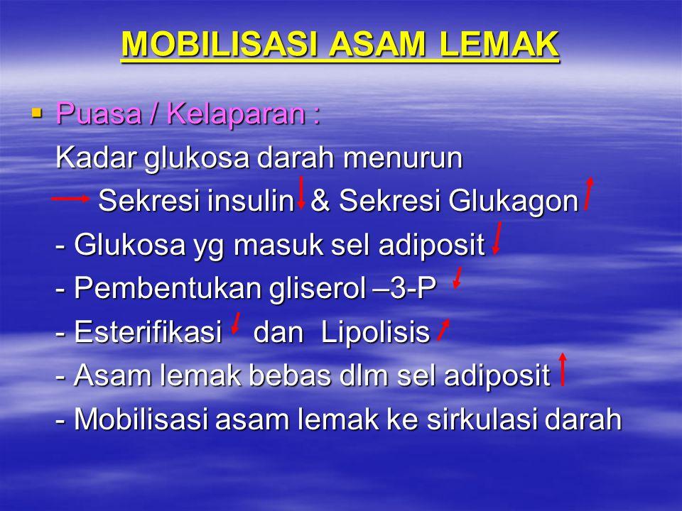 MOBILISASI ASAM LEMAK  Puasa / Kelaparan : Kadar glukosa darah menurun Sekresi insulin & Sekresi Glukagon - Glukosa yg masuk sel adiposit - Pembentuk