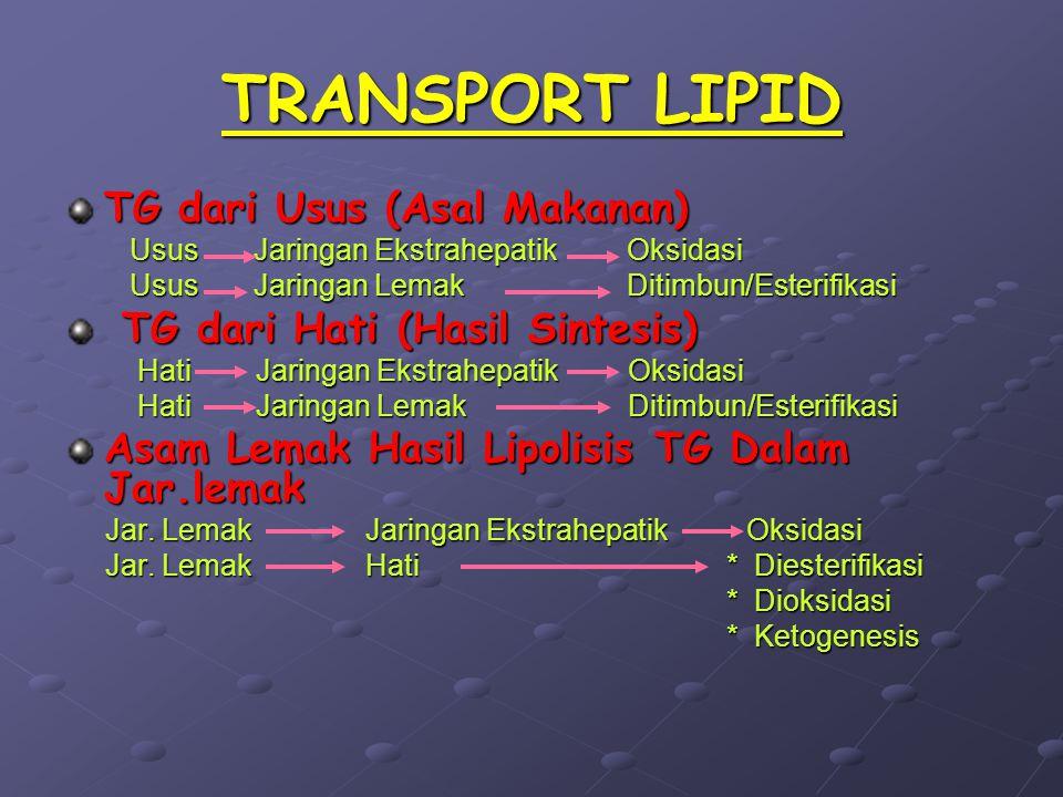 TRANSPORT LIPID TG dari Usus (Asal Makanan) Usus Jaringan Ekstrahepatik Oksidasi Usus Jaringan Ekstrahepatik Oksidasi Usus Jaringan Lemak Ditimbun/Est