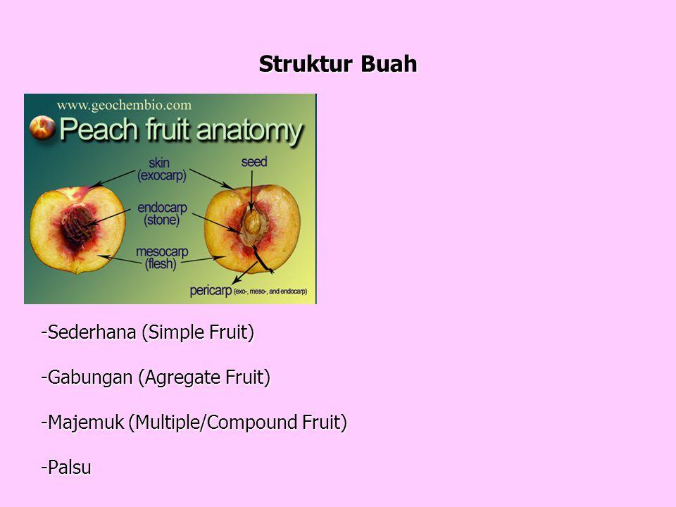 Struktur Buah Buah Masak Biji (Seed)Buah Masak Biji (Seed) Kulit Buah (Pericarp) Kulit Buah (Pericarp) - Exocarp - Mesocarp - Mesocarp - Endocarp (Dinding Tebal) - Endocarp (Dinding Tebal) Tipe Buah: -Sederhana (Simple Fruit) -Gabungan (Agregate Fruit) -Majemuk (Multiple/Compound Fruit) -Palsu