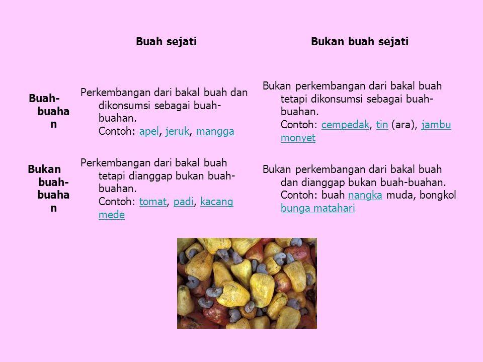 Buah sejatiBukan buah sejati Buah- buaha n Perkembangan dari bakal buah dan dikonsumsi sebagai buah- buahan.