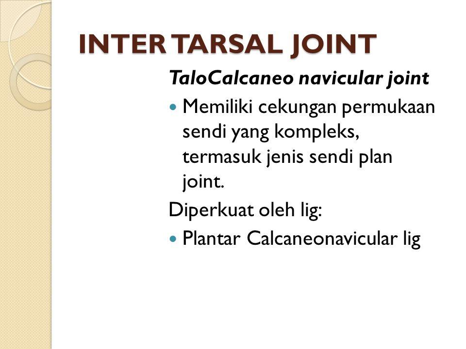 INTER TARSAL JOINT TaloCalcaneo navicular joint Memiliki cekungan permukaan sendi yang kompleks, termasuk jenis sendi plan joint. Diperkuat oleh lig: