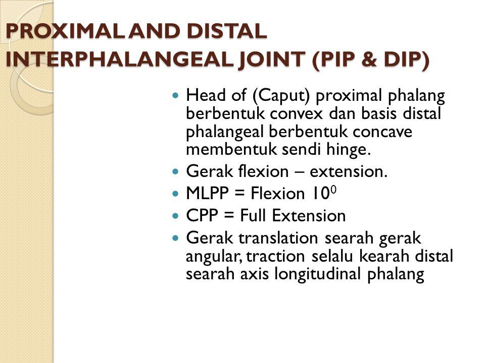PROXIMAL AND DISTAL INTERPHALANGEAL JOINT (PIP & DIP) Head of (Caput) proximal phalang berbentuk convex dan basis distal phalangeal berbentuk concave