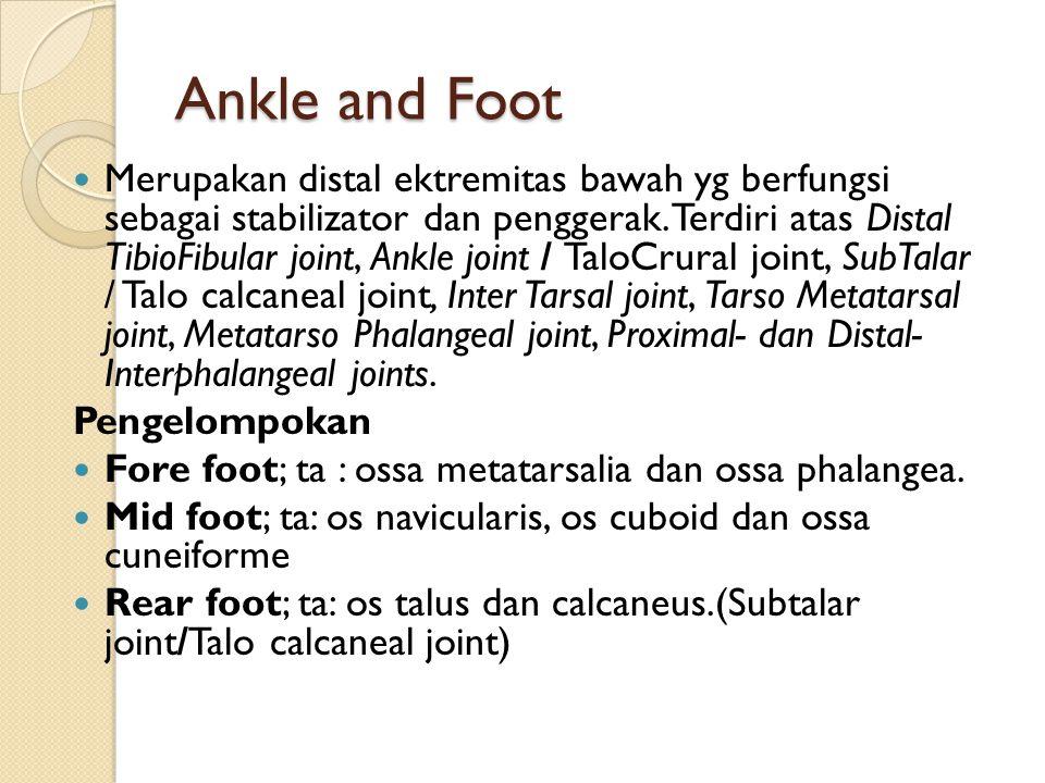 Ankle and Foot Merupakan distal ektremitas bawah yg berfungsi sebagai stabilizator dan penggerak. Terdiri atas Distal TibioFibular joint, Ankle joint