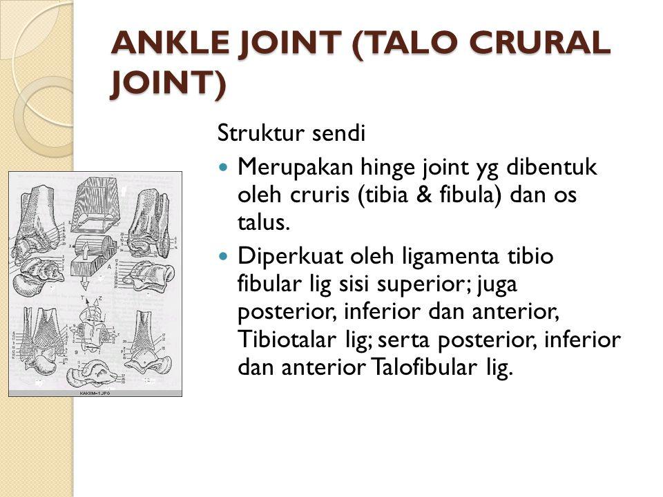 ANKLE JOINT (TALO CRURAL JOINT) Struktur sendi Merupakan hinge joint yg dibentuk oleh cruris (tibia & fibula) dan os talus. Diperkuat oleh ligamenta t