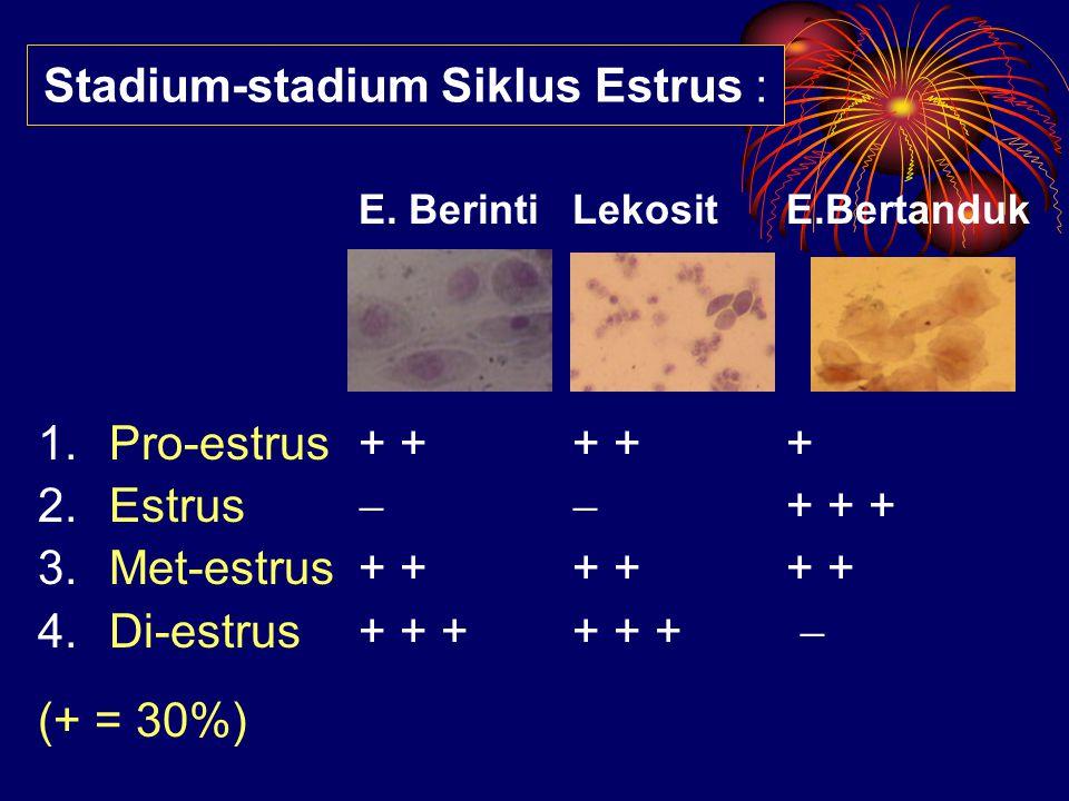 E. Berinti Lekosit E.Bertanduk 1.Pro-estrus + ++ ++ 2.Estrus   + + + 3.Met-estrus + ++ ++ + 4.Di-estrus+ + ++ + +  (+ = 30%) Stadium-stadium Siklus