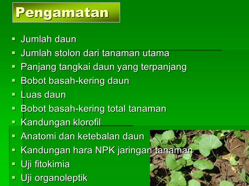  Jumlah daun  Jumlah stolon dari tanaman utama  Panjang tangkai daun yang terpanjang  Bobot basah-kering daun  Luas daun  Bobot basah-kering tot