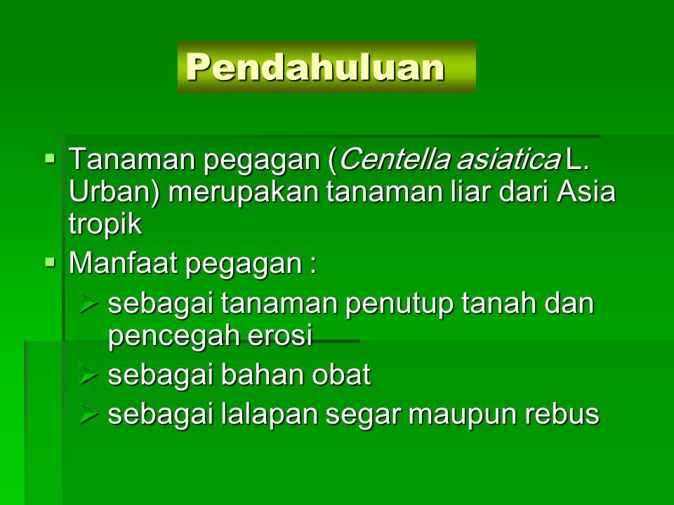 Pendahuluan  Tanaman pegagan (Centella asiatica L. Urban) merupakan tanaman liar dari Asia tropik  Manfaat pegagan :  sebagai tanaman penutup tanah
