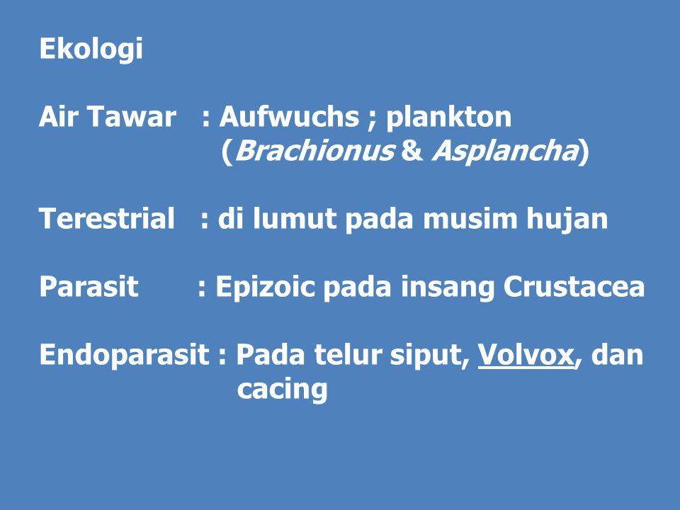 Ekologi Air Tawar : Aufwuchs ; plankton (Brachionus & Asplancha) Terestrial : di lumut pada musim hujan Parasit : Epizoic pada insang Crustacea Endoparasit : Pada telur siput, Volvox, dan cacing