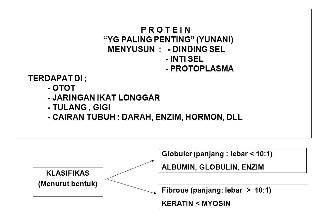 P R O T E I N YG PALING PENTING (YUNANI) MENYUSUN : - DINDING SEL - INTI SEL - PROTOPLASMA TERDAPAT DI ; - OTOT - JARINGAN IKAT LONGGAR - TULANG, GIGI - CAIRAN TUBUH : DARAH, ENZIM, HORMON, DLL KLASIFIKAS (Menurut bentuk) Globuler (panjang : lebar < 10:1) ALBUMIN, GLOBULIN, ENZIM Fibrous (panjang: lebar > 10:1) KERATIN < MYOSIN