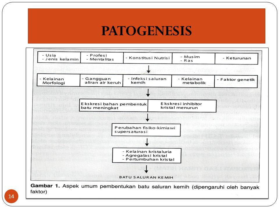 PATOGENESIS 14