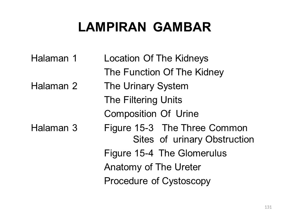 LAMPIRAN GAMBAR Halaman 1Location Of The Kidneys The Function Of The Kidney Halaman 2The Urinary System The Filtering Units Composition Of Urine Halaman 3Figure 15-3 The Three Common Sites of urinary Obstruction Figure 15-4 The Glomerulus Anatomy of The Ureter Procedure of Cystoscopy 131