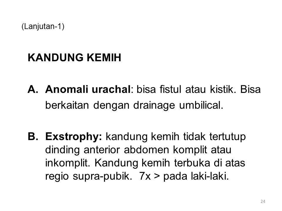 (Lanjutan-1) KANDUNG KEMIH A.Anomali urachal: bisa fistul atau kistik. Bisa berkaitan dengan drainage umbilical. B.Exstrophy: kandung kemih tidak tert