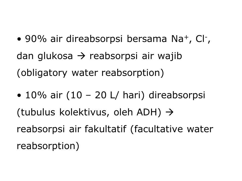 90% air direabsorpsi bersama Na +, Cl -, dan glukosa  reabsorpsi air wajib (obligatory water reabsorption) 10% air (10 – 20 L/ hari) direabsorpsi (tu