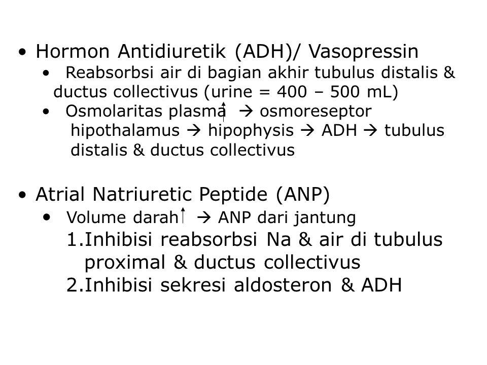 Hormon Antidiuretik (ADH)/ Vasopressin Reabsorbsi air di bagian akhir tubulus distalis & ductus collectivus (urine = 400 – 500 mL) Osmolaritas plasma