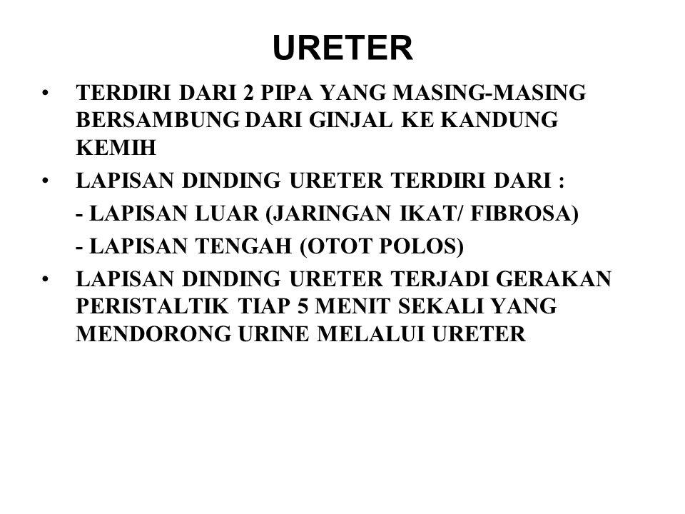 URETER TERDIRI DARI 2 PIPA YANG MASING-MASING BERSAMBUNG DARI GINJAL KE KANDUNG KEMIH LAPISAN DINDING URETER TERDIRI DARI : - LAPISAN LUAR (JARINGAN IKAT/ FIBROSA) - LAPISAN TENGAH (OTOT POLOS) LAPISAN DINDING URETER TERJADI GERAKAN PERISTALTIK TIAP 5 MENIT SEKALI YANG MENDORONG URINE MELALUI URETER