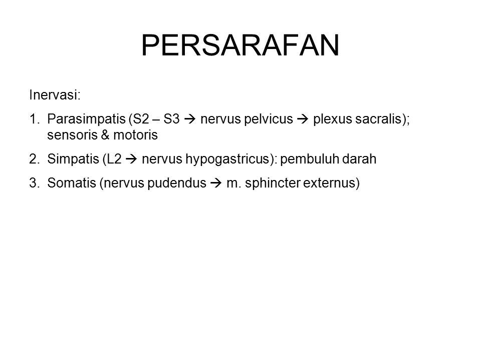 PERSARAFAN Inervasi: 1.Parasimpatis (S2 – S3  nervus pelvicus  plexus sacralis); sensoris & motoris 2.Simpatis (L2  nervus hypogastricus): pembuluh