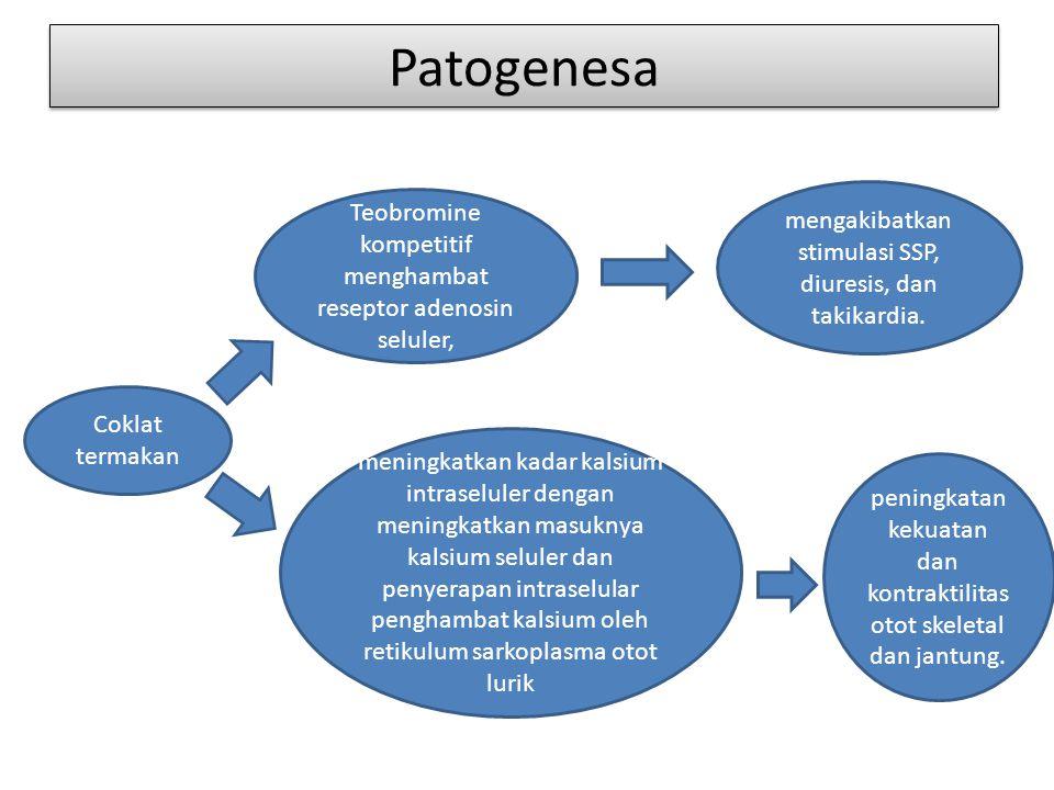 Patogenesa Coklat termakan Teobromine kompetitif menghambat reseptor adenosin seluler, mengakibatkan stimulasi SSP, diuresis, dan takikardia.