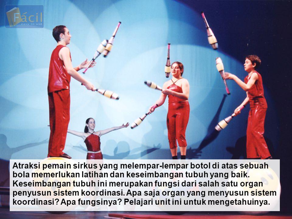 Atraksi pemain sirkus yang melempar-lempar botol di atas sebuah bola memerlukan latihan dan keseimbangan tubuh yang baik.