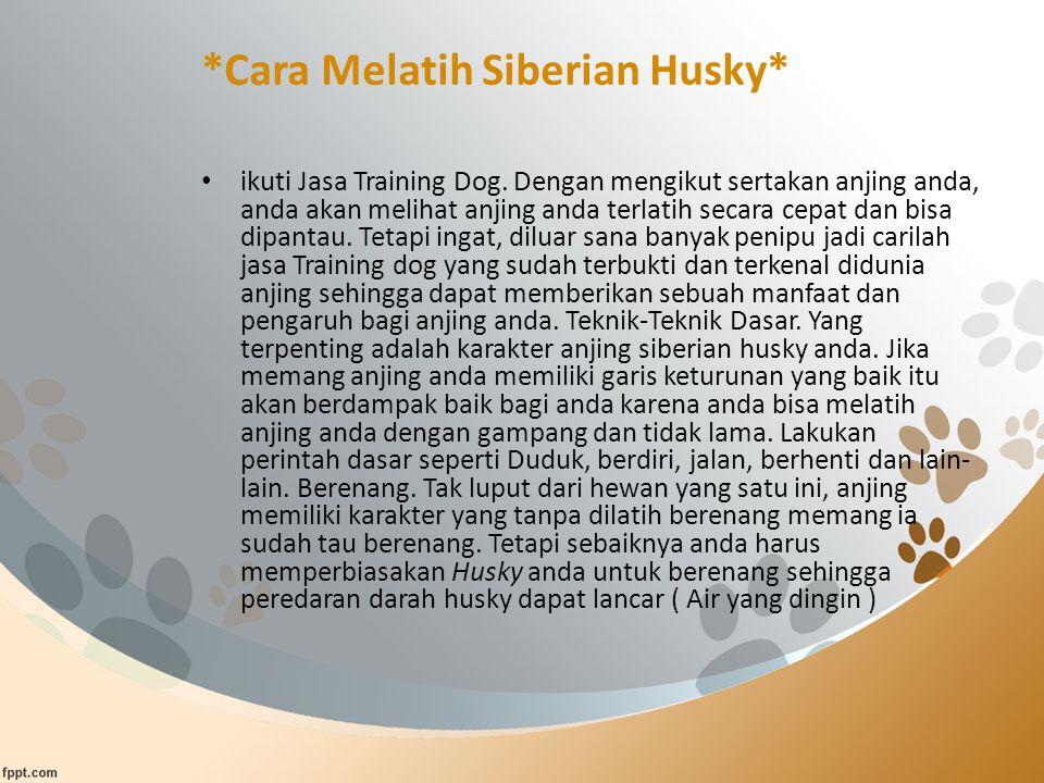 *Cara Melatih Siberian Husky* ikuti Jasa Training Dog. Dengan mengikut sertakan anjing anda, anda akan melihat anjing anda terlatih secara cepat dan b