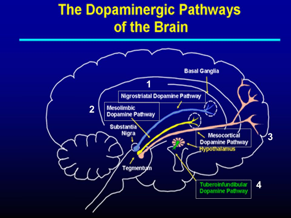 Hipotesis Dopaminergik 1 2 3 4