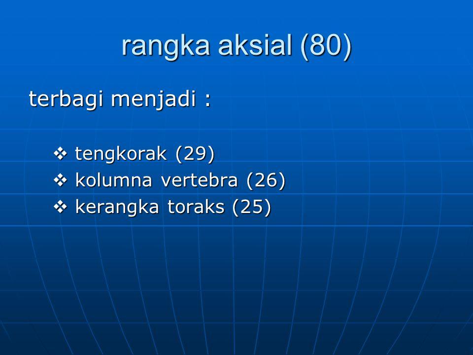 rangka aksial (80) terbagi menjadi :  tengkorak (29)  kolumna vertebra (26)  kerangka toraks (25)