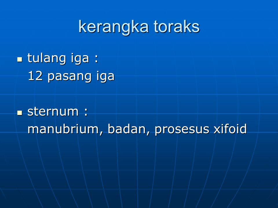 kerangka toraks tulang iga : tulang iga : 12 pasang iga sternum : sternum : manubrium, badan, prosesus xifoid