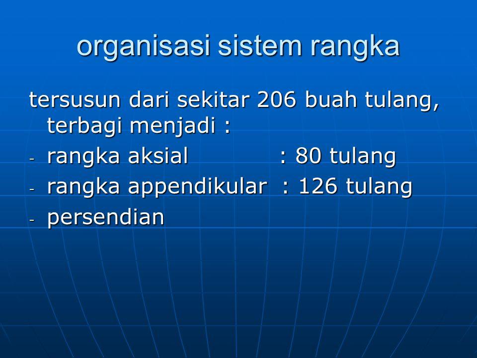organisasi sistem rangka tersusun dari sekitar 206 buah tulang, terbagi menjadi : - rangka aksial : 80 tulang - rangka appendikular : 126 tulang - per