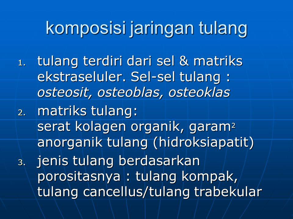 anatomi tipikal tulang panjang diafisis: tulang kompak silinder tebal yang membungkus medula: diafisis: tulang kompak silinder tebal yang membungkus medula: - rongga sumsum tulang - endosteum - periosteum epifisis epifisis